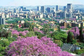 Pretoria,  known as the Jacaranda City, Pretoria, Tshwane, Gauteng